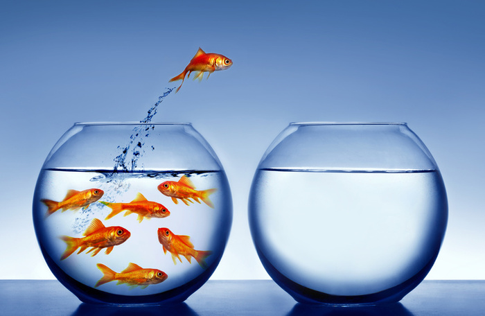 What is a pregnant goldfish called thought repository for Fish dream meaning pregnancy